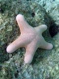 鱼星形 免版税库存图片