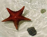 鱼星形 免版税图库摄影