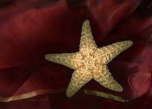 鱼星形 库存照片