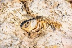 鱼最基本的尸体的关闭在海滩说谎 免版税库存照片