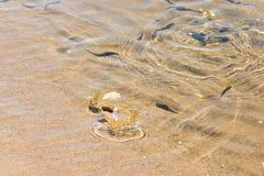 鱼最近孵化了 免版税图库摄影