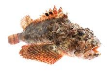 鱼栖息处石头 免版税图库摄影