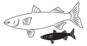 鱼梭鱼 免版税库存图片