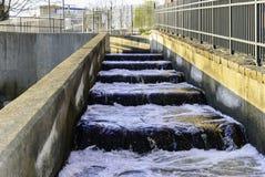 鱼梯Waltham马萨诸塞 免版税图库摄影