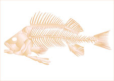 鱼概要 免版税库存照片