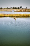 鱼横向池塘 库存照片