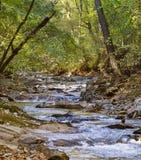 鱼水坝小河波纹通过森林地 库存图片