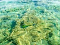 鱼水 图库摄影