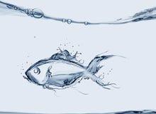 鱼水 免版税库存图片