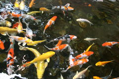 鱼池 库存照片