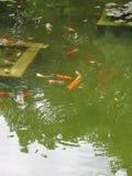 鱼池 免版税库存照片