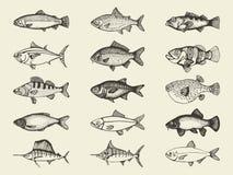 鱼河和海洋葡萄酒集合 传染媒介手图画 免版税库存照片