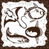 鱼海洋集合向量 免版税库存图片