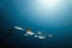 鱼海洋 库存照片