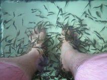 鱼温泉按摩 库存图片