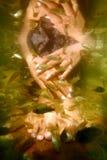 鱼温泉 免版税图库摄影