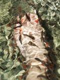 鱼温泉 免版税库存图片