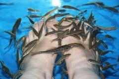 鱼温泉 图库摄影