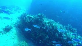 鱼游泳学校在一会儿潜水之前 股票录像