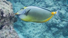 鱼潜航热带 免版税库存照片