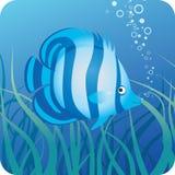 鱼热带下面水 皇族释放例证