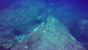 鱼热带礁石,射击巨型学校在红海,苏丹水下的射击 影视素材