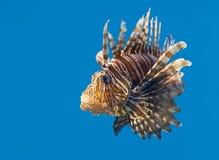 鱼热带水 库存图片