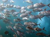 鱼生活海洋 库存照片