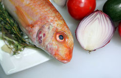 鱼用葱 库存照片