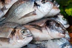 鱼界面 免版税图库摄影