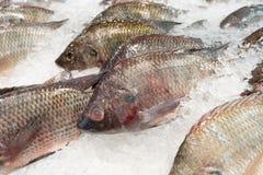 鱼界面 库存图片
