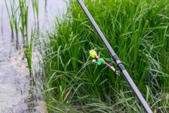 鱼的响铃在钓鱼竿咬住反对绿色背景  免版税库存照片