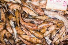鱼的商店在保加利亚 免版税库存照片