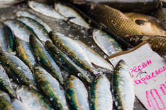 鱼的商店在保加利亚 库存图片