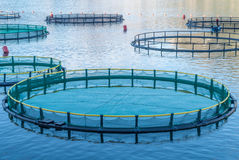 养鱼的笼子 免版税库存照片