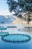 养鱼的笼子 免版税库存图片
