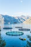 养鱼的笼子 库存图片