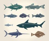 鱼的葡萄酒例证 免版税库存图片