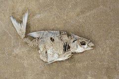 鱼的骨骼在沙子的 生态学问题 免版税库存图片