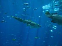 鱼盐水 库存照片