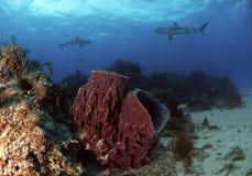 鱼礁石尾标 免版税库存照片