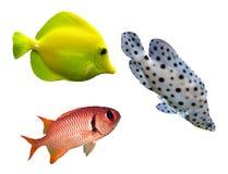 鱼礁石 库存照片