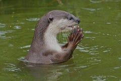 鱼祈祷一些 免版税库存照片