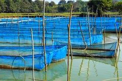 鱼笼子在池塘 免版税库存照片