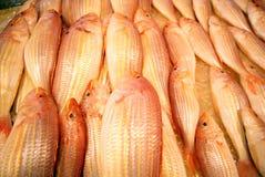 鱼红木 图库摄影