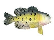鱼纪念品 库存图片