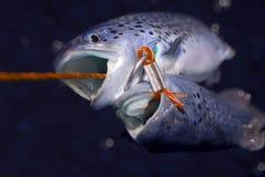 鱼纵梁 库存照片