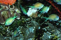 鱼组 图库摄影