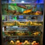 鱼缸香港餐馆 免版税库存照片