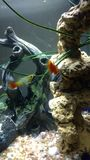 鱼缸 库存照片